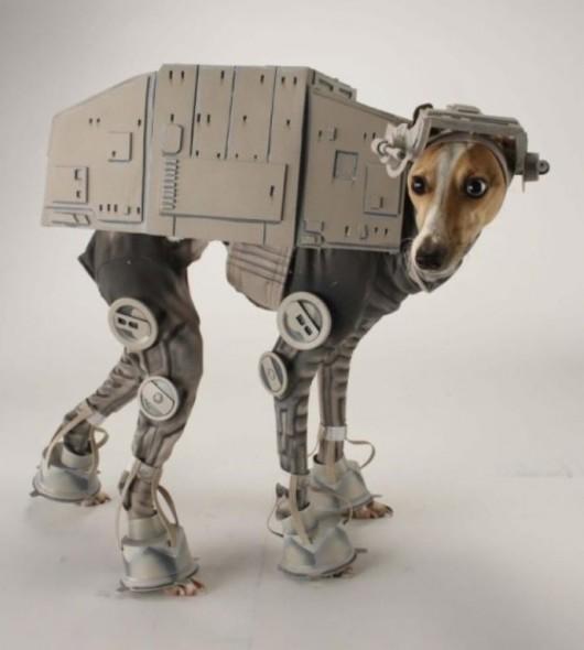 Best-Dog-Costume
