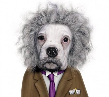 einstein pup